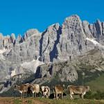Dolomiti - Camping Serenissima Venezia
